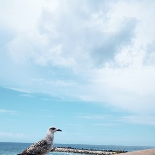 Jonathan Seagull discovered that boredom and fear and anger are the reasons that a gull's life is so short, and with these gone from his thought, he lived a long fine life indeed. We're free to go where we wish and to be what we are.
